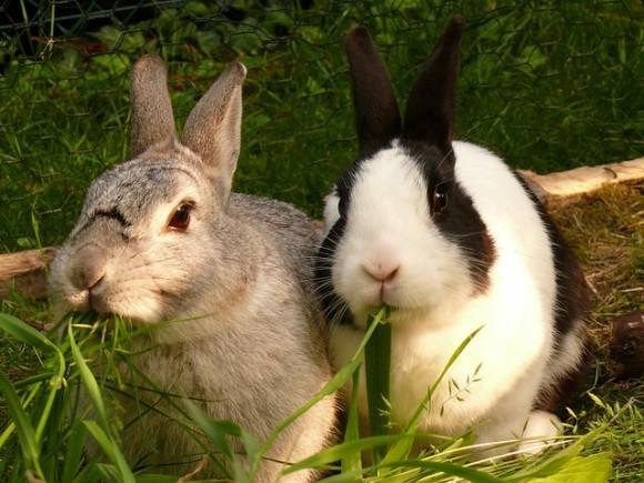 iphone6-case-rabbit
